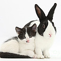 Kitten And Dutch Rabbit by Mark Taylor