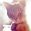 Kitten by Eleonora Grasso Photography