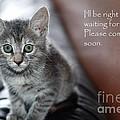 Kitten Greeting Card by Micah May
