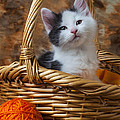 Kitten In Basket With Orange Yarn by Garry Gay