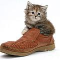 Kitten In Shoe by Mark Taylor