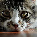 Kitten by Molly Picklesimer