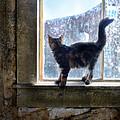 Kitten On Windowsill Of Abandoned House by Jill Battaglia