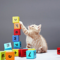Kitten Playing With Building Blocks by Martin Poole