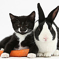 Kitten, Rabbit And Carrot by Mark Taylor