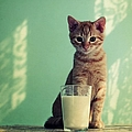 Kitten With Glass Of Milk by By Julie Mcinnes