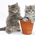 Kittens In Pot by Mark Taylor