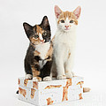 Kittens On Birthday Package by Mark Taylor