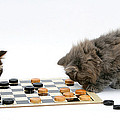 Kittens Playing Checkers by Mark Taylor