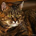 Kitty Cat by Edward Peterson
