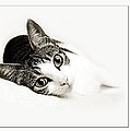 Kitty Cat Greeting Card Get Well Soon by Andee Design