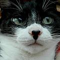 Kitty Closeup by LeeAnn McLaneGoetz McLaneGoetzStudioLLCcom