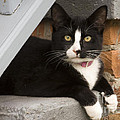 Kitty by Darleen Stry