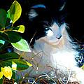 Kitty Hideaway by Elinor Mavor