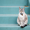 Kitty On Blue Steps by Lauren Rosenbaum