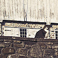Kitty On Guard by Trish Tritz