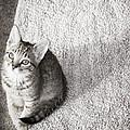 Kitty's Shadow by Trish Tritz