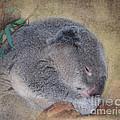 Koala Sleeping by Betty LaRue