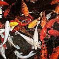 Koi Fish Movement Iv by Joe Carini - Printscapes