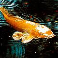 Koi In Pond by Maggy Marsh