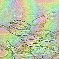 Koi Rainbow by Tim Allen