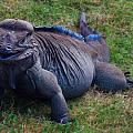 Komodo Dragon by Rianna Stackhouse