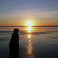 Labrador Watching The Sun Set by Pamela Patch