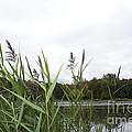 Lac Des Castors by Donato Iannuzzi