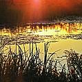 Lacassine Sundown by Lizi Beard-Ward