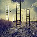 Ladders Reaching To The Sky In A Autumn Field by Sandra Cunningham