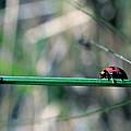 Ladybird by Jocelyn Kahawai