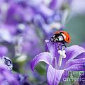 Ladybug And Bellflowers by Nailia Schwarz