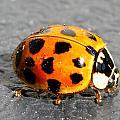 Ladybug In The Sun by Mark J Seefeldt