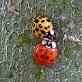 Ladybug Love by Judy Wanamaker