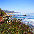 Laguna Beach California Coastline by Paul Velgos