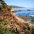 Laguna Beach Coastline Photo by Paul Velgos