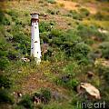 Laguna Beach Light Tower by Henrik Lehnerer