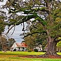 Laid Back Louisiana by Steve Harrington