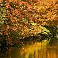 Lake And Forest In Autumn by David Chapman