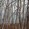 Lake Beyond The Trees by Dyana Rzentkowski