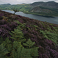 Lake District View From A Hillside by Annie Griffiths