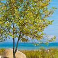 Lake Huron Seashore by Anne Kitzman