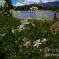 Lake Irwin Wildflowers by Crystal Garner