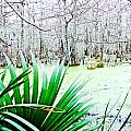 Lake Martin Swamp View by Lizi Beard-Ward