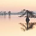 Lake Mattamuskeeet Sunrise by Bill Swindaman