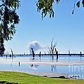 Lake Of The Black Stumps.. Tree Framed by Kaye Menner
