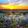 Lake Okeechobee Sunset by Tracy Welker