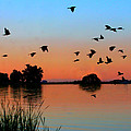 Lake Sunset by JL Creative  Captures