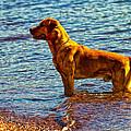 Lake Superior Puppy by Linda Tiepelman