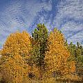 Lake Tahoe Aspen Sky by John Stephens
